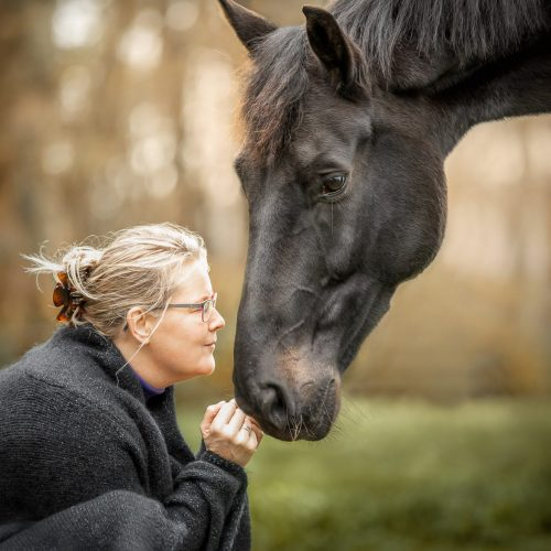 coach paard fruhling